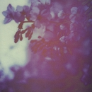 Cherry trees/キリト