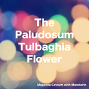 The Paludosum Tulbaghia Flower/Magenta Crinum with Mandarin