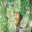 Caicada/Cashier