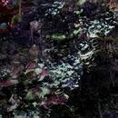 Sweet EP/SweetSleep