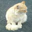 野良猫/レモン探偵
