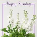 Happy Sunday/Wonder Music