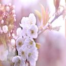 Flower/レモン探偵