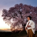 季(TOKI)-春-/藤原道山