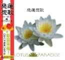 慈蓮想歌/ロータス★パラダイス