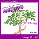 ハマボウフウ/テミヤン