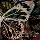 The Butterfly Effect TYPE-A/Misaruka