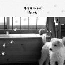白い犬/キマタツトム