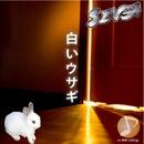 白いウサギ/SIVA
