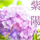 紫陽花/雲