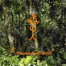 Watercoloured Forest/森の人 - MbiraKalimba Acoustics