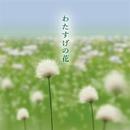 わたすげの花/KOZUE