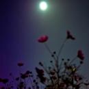 reflection feat.Lily/kumasyun