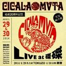 CICALA-MVTA結成20周年記念LIVE at磔磔/CICALA MVTA