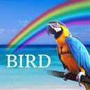 BIRD feat.CUL/HACHIBEE