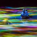 小舟とともに踊る鯉によって描かれる水面のドローイングと蓮の花 - Mifuneyama Rakuen Pond/高橋英明 teamLab