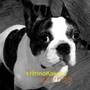 ヒビノカケラ Vol.12/ヒビノカケラ