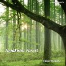 Togakushi Forest 戸隠の森/土方 裕雄