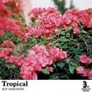 Tropical/Boy Funktastic