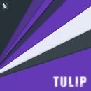 Tulip/Y-rich