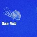 Macro World/Abel Moreno & Ahmet Kermeli & Alekssandar & DJ Nikita Noskow & Alex Sender & Andre Hecht & Andrew By & Aleskandr L&N & Andrew Raven & Andrique & 2 Voices & AngeliyA