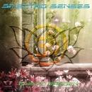 Mystic Garden/Spectro Senses & Balistic Sound