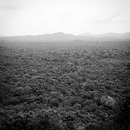 Trippy Road EP (Array)/Arph