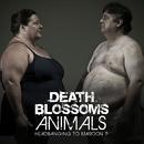 Animals – Headbanging to Maroon 5/Death Blossoms