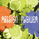 PASSION FLOWER/THE SQUARE/T-スクェア