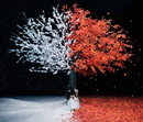 茜さす/everlasting snow/Aimer