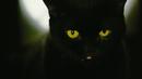 ベイビーユー/黒猫チェルシー