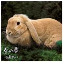 春の夢/川嶋あい