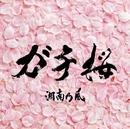ガチ桜/湘南乃風