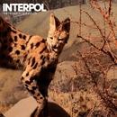 The Heinrich Maneuver/Interpol