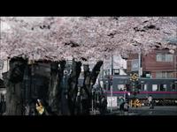 桜color/GReeeeN