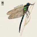 Dragonfly/Strawbs