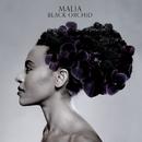 Black Orchid/Malia