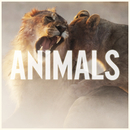 Animals/Maroon 5