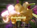 Profundidad(Lyric Video)/Coti