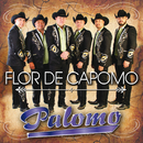 Flor De Capomo/Palomo