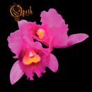 Orchid/Opeth
