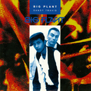 Sandy Travis/Big Plant
