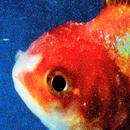 Big Fish Theory/Vince Staples