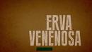 Erva Venenosa (Lyric Video)/Valentina Francisco