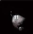 11/cali≠gari