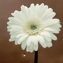 花は咲く instrumental/花は咲くプロジェクト