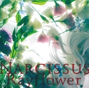 Narcissus/Rayflower