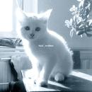 A Kitten/Nail