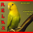 Relax Dreaming Birds/BOH-HD