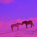 Rainbow/Chavinsky
